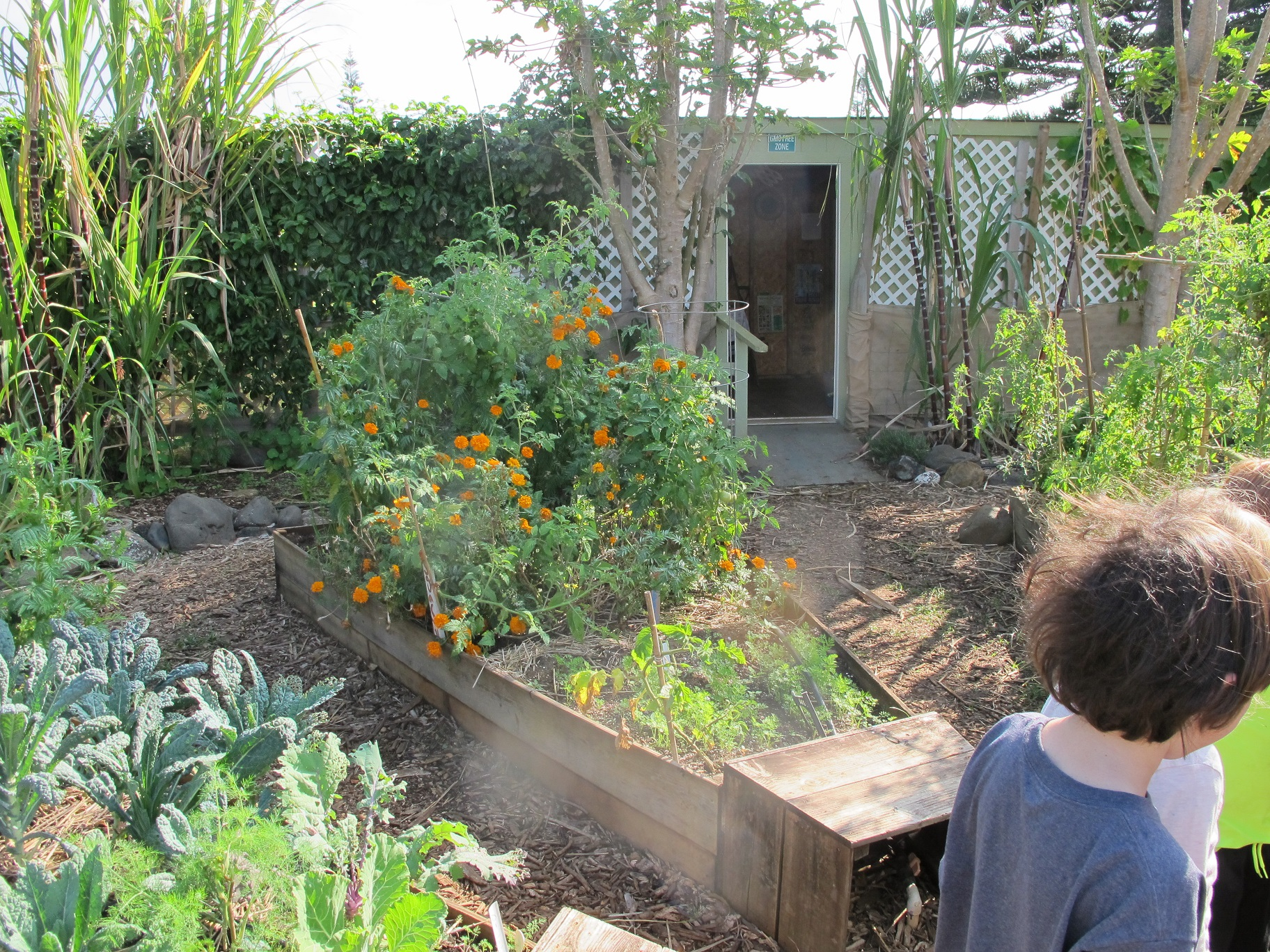 Children's Haiku Garden , a site with poetry and illustrations by