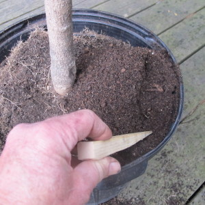 Pushing soil down the sides of the pot